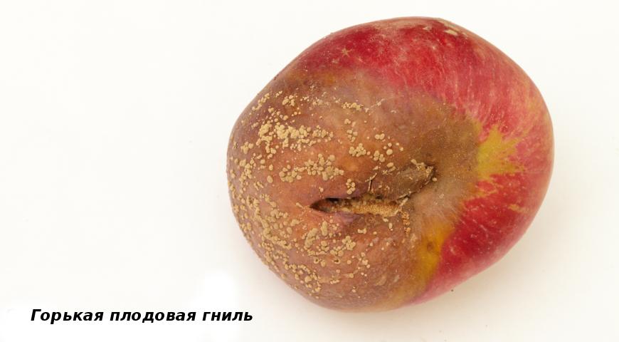 Горькая плодовая гниль