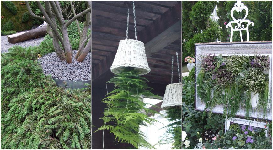 Необычные способы посадки растений