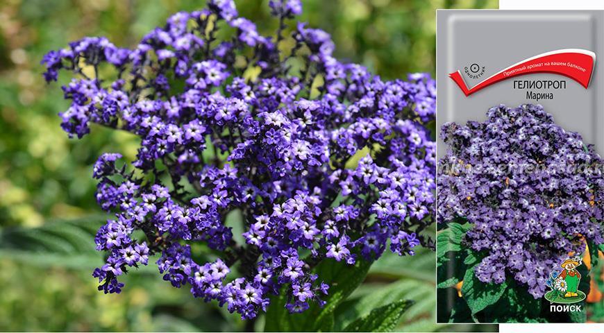 Именной сад: сорта цветочных и садовых культур с именем Марина
