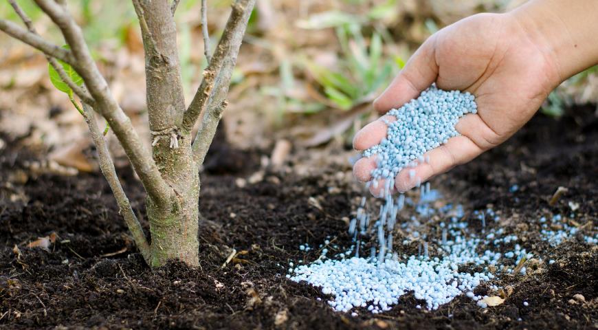 Какие удобрения вносят осенью в сад и в огород: минеральные или органические?