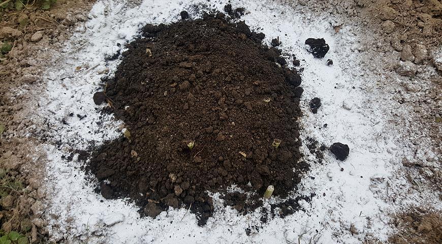 Подготовка пионов к зиме за 4шага