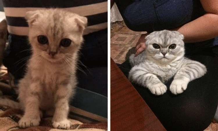 37918 Из котенка в котяру: люди поделились фотографиями мурлык в детстве и сейчас