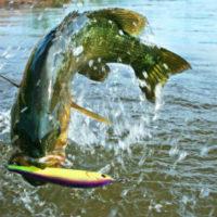 37414 Ловля рыбы толкование сонника