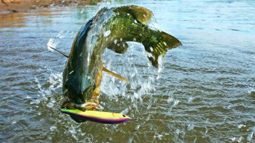 Ловля рыбы толкование сонника