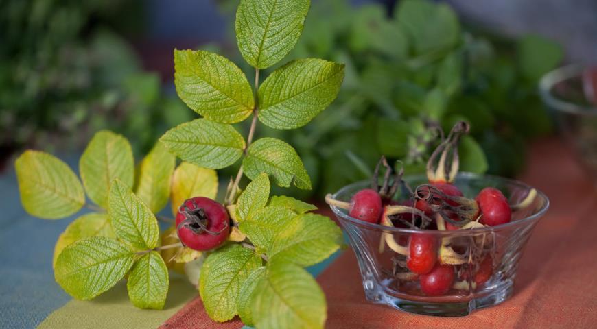 37481 Шиповник для нашего здоровья: самые витаминные виды и полезные рецепты