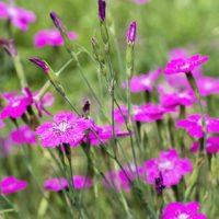 36905 Цветочный гороскоп на 3-11 сентября для ярких и уверенных в себе