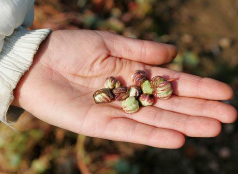 Огород: сезонные работы в октябре