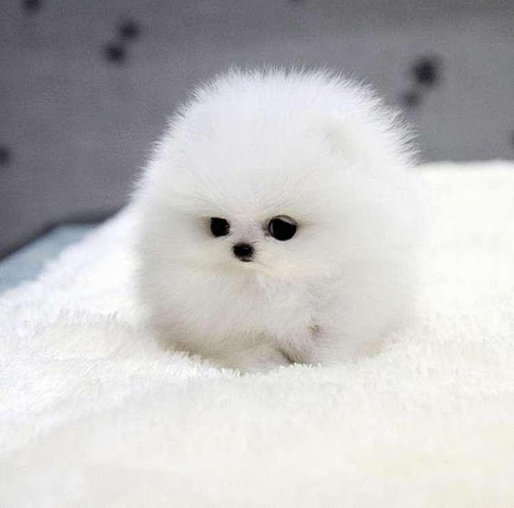 25 самых милых щенков, на которых невозможно налюбоваться