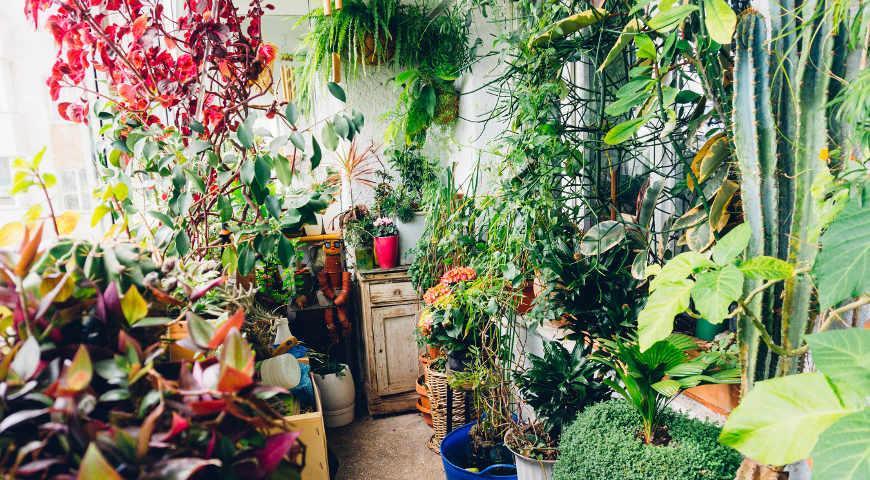 38989 6 комнатных растений, которые приносят удачу