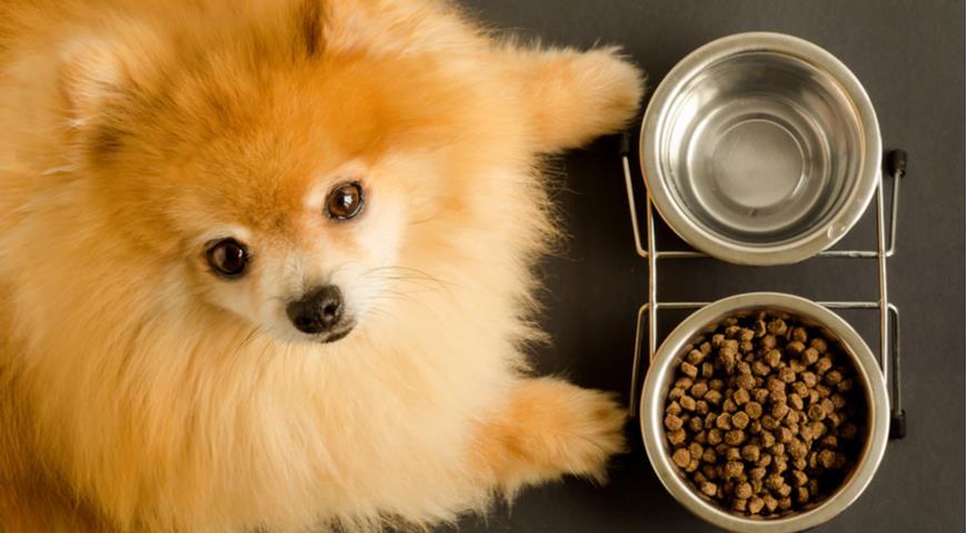 собака, корм для животных