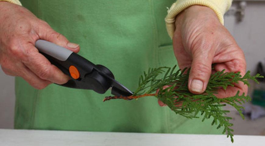 Осеннее черенкование растений