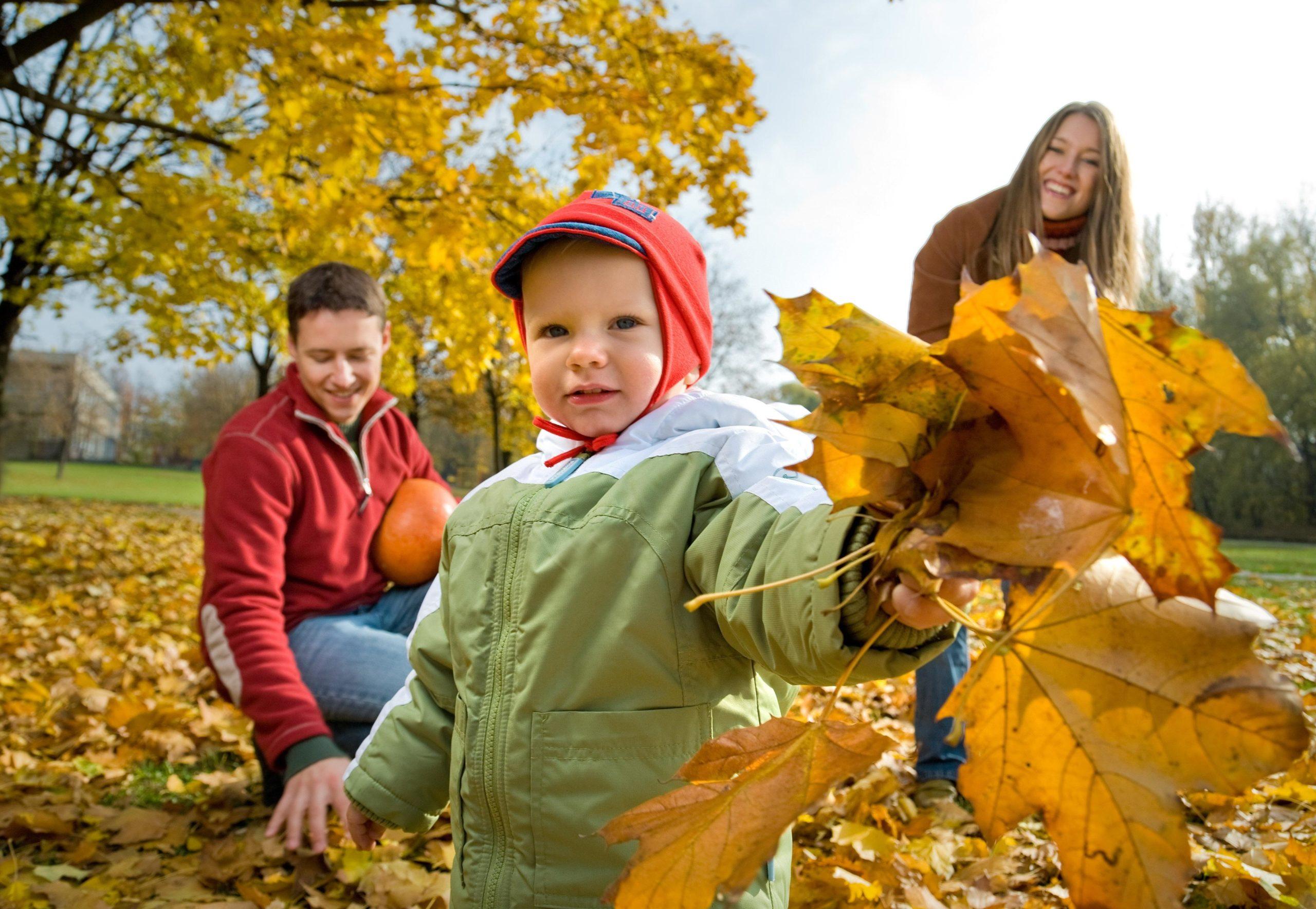38425 Детский вопрос: почему осенью листья желтеют и краснеют?