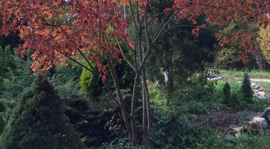 38194 Осеннее черенкование растений