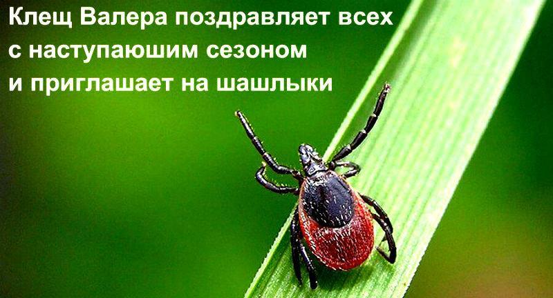 38515 В России поставили памятник клещу