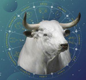 Восточный гороскоп на 2021 год Быка