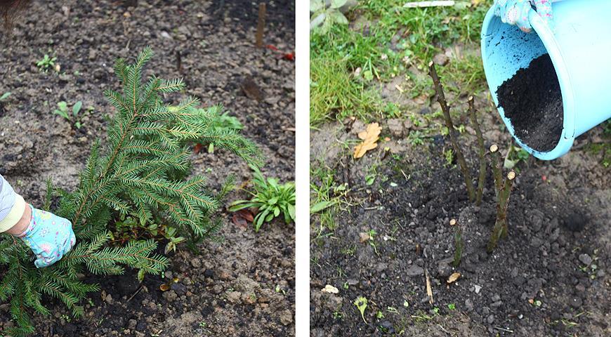 40298 Чем укрыть теплолюбивые растения на зиму?