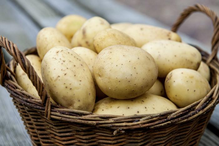40536 Ищите новые сорта картофеля?