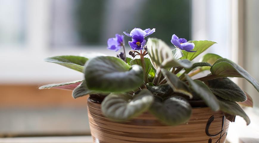 Осень-зима: как избежать ошибок в уходе за комнатными растениями