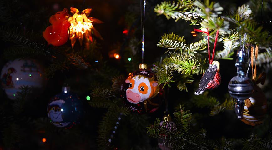 40894 5 рецептов, чтобы новогодняя елка стояла как можно дольше