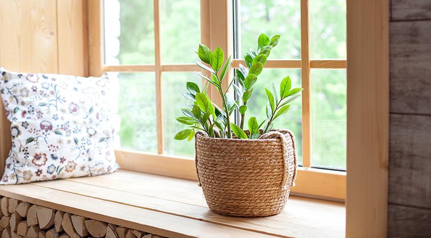Ядовитые комнатные растения, опасные для детей и животных