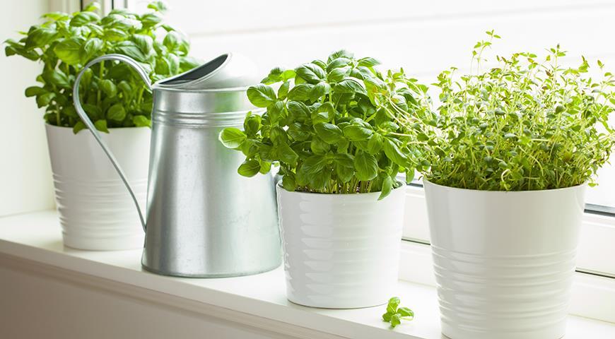 Самые подходящие растения для кухни
