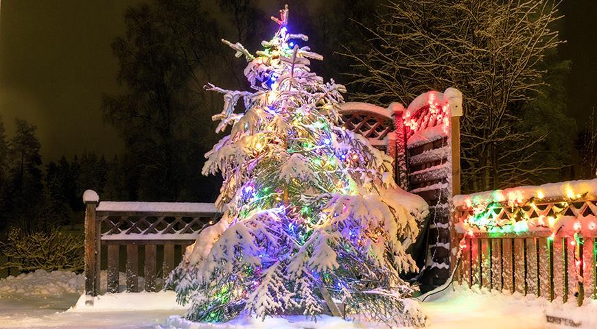 41196 Как украсить елку в саду к Новому году: что можно, а что не стоит использовать в качестве уличных украшений?
