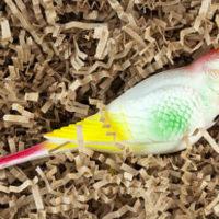 41135 Мертвый попугай толкование сонника
