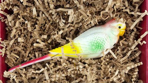 мертвый попугай во сне