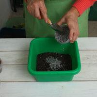 41554 Особенности выращивания замиокулькаса в комнатных условиях