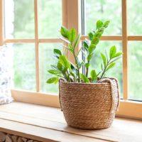 41530 Ядовитые комнатные растения, опасные для детей и животных