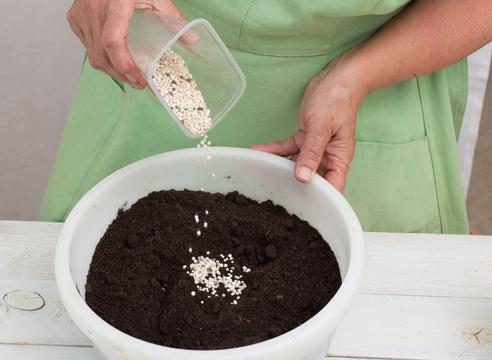 эустома, выращивание рассады, почвенная смесь