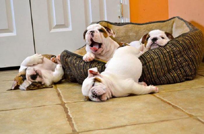 Когда очень устал! (13 фото)