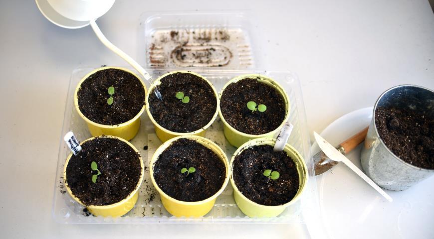 Полив рассады: как правильно поливать семена, сеянцы и рассаду овощей и цветов