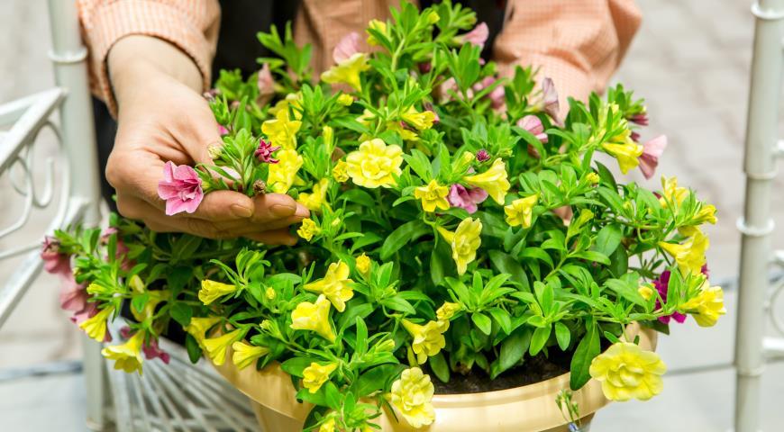 Какие хитрости помогут правильно покупать растения и готовую рассаду в садовом центре и питомниках