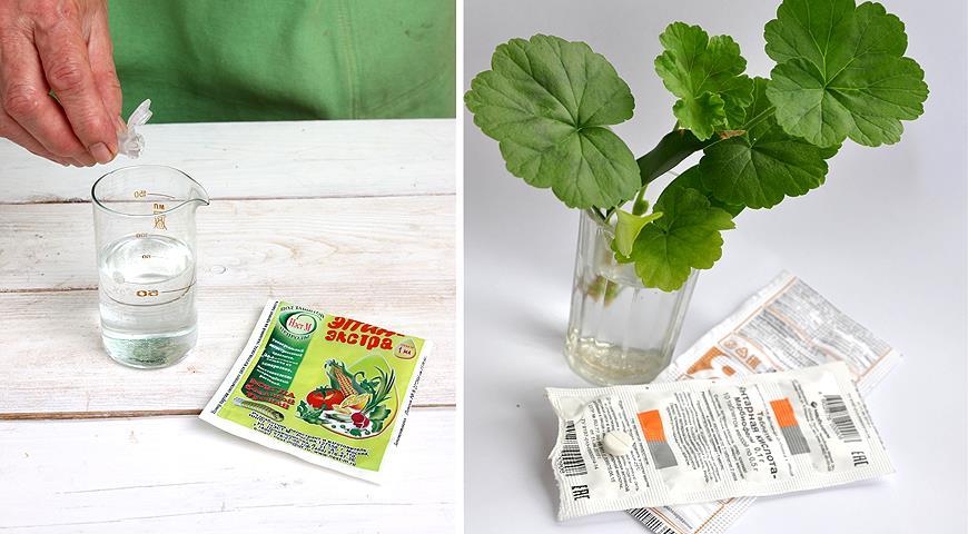Предпосевная обработка семян: какие препараты могут вам понадобиться для посева семян на рассаду