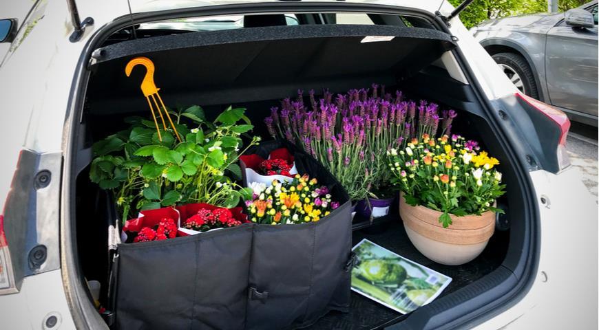 42578 Какие хитрости помогут правильно покупать растения и готовую рассаду в садовом центре и питомниках
