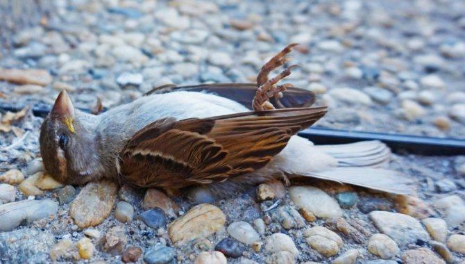 42580 Мертвая сова толкование сонника