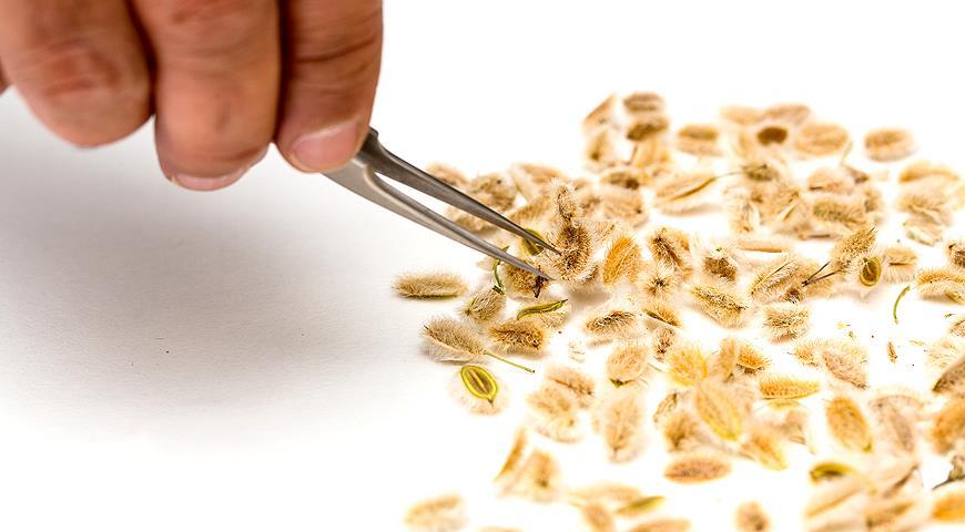 42523 Предпосевная обработка семян: какие препараты могут вам понадобиться для посева семян на рассаду