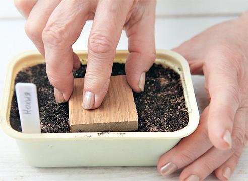 Выращивание кохии через рассаду: пошаговый мастер-класс