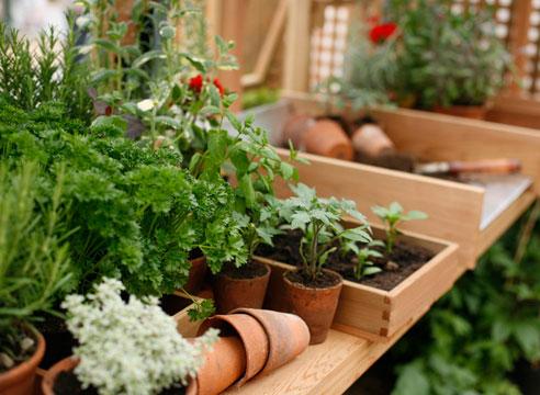 Удобрения и подкормки рассады: выбор, состав, способы применения