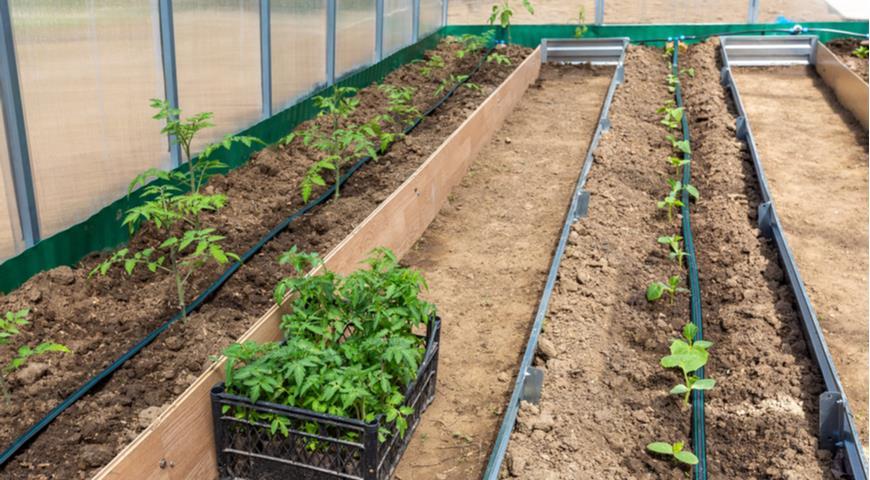 огурцы и помидоры в теплице