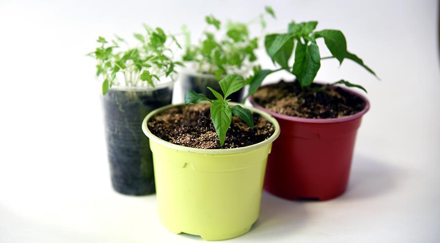 43137 Грунт для перцев: свой и покупной грунт для посева и пикировки перцев