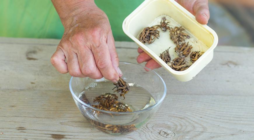 43539 Как купить, сохранить и посадить корнеклубни ранункулюсов