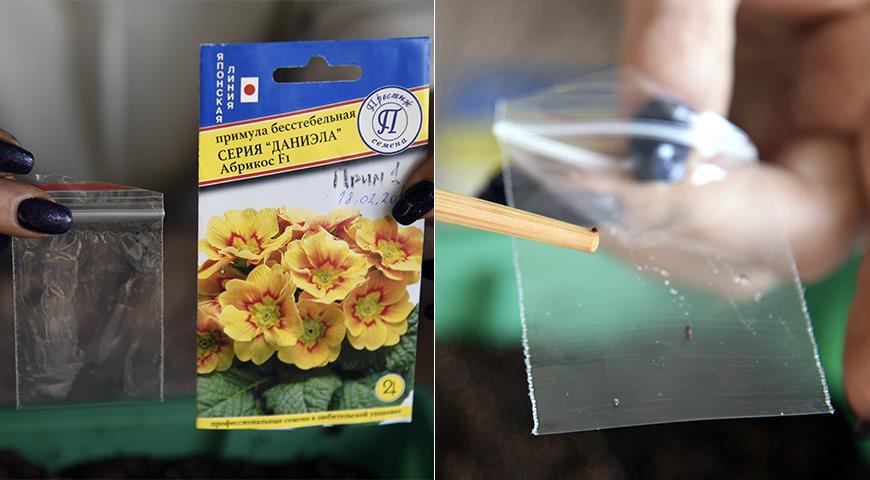 43472 Как посеять мелкие и редкие семена: лайфхаки от Суперсадовника
