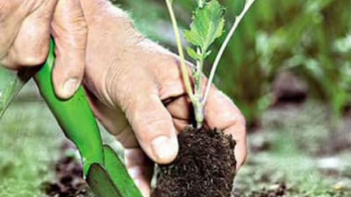 садить рассаду огурцов и томатов в июне