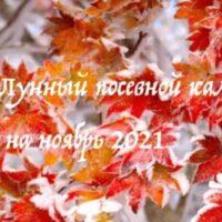43442 Лунный календарь садовода и огородника на ноябрь 2021 года