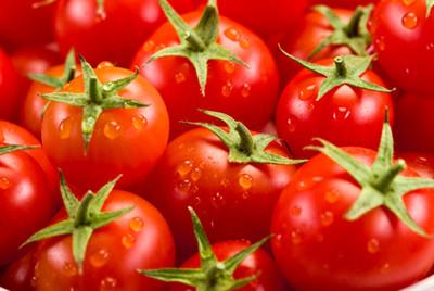 Ученые обнаружили, что нужно томатам для полного счастья