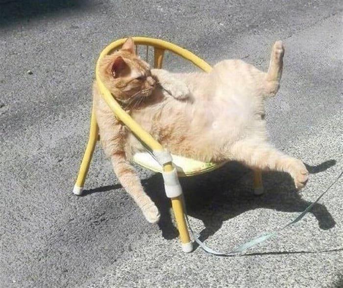 43752 13 смешных мини-историй в картинках про котиков