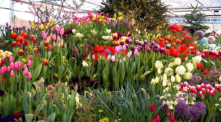 Куда сводить девушку на 8 марта? Счастье в цветах, а большое счастье – в большом количестве цветов!
