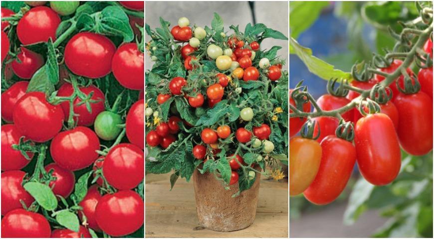44209 Овощи на балконе: подходящие сорта и секреты урожая томатов, баклажанов, перцев и т.д. в контейнерах
